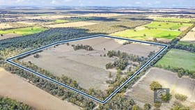 Rural / Farming commercial property for sale at 1 and 2/520 Bangerang  Road Echuca Village VIC 3564