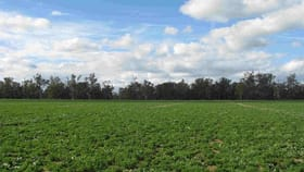 Rural / Farming commercial property for sale at 'Mingar' 35 Tomanbil Road Forbes NSW 2871