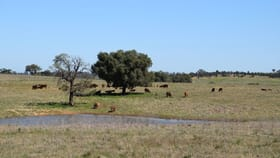Rural / Farming commercial property for sale at 'Linedale' 23 Westella Road Geurie NSW 2818