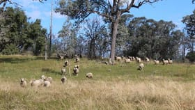 Rural / Farming commercial property for sale at 900 Whitlow Road Bingara NSW 2404