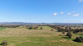 Rural / Farming commercial property for sale at 327 Springfield Lane Mudgee NSW 2850