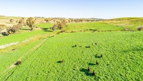 Rural / Farming commercial property for sale at 395 Old Yullundry Road Cumnock NSW 2867