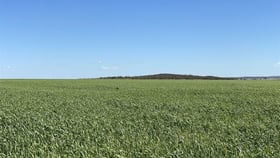 """Rural / Farming commercial property for sale at . """"Barry's"""" Bencubbin WA 6477"""