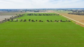 Rural / Farming commercial property for sale at Stud Park Road Deniliquin NSW 2710