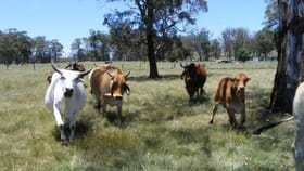 Rural / Farming commercial property for sale at 530 Donnelly's Road, Shannon Vale via Glen Innes NSW 2370