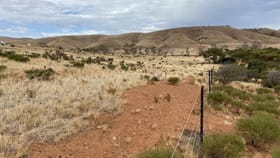 Rural / Farming commercial property for sale at Lot 449 Pine Crest Road Cambrai SA 5353