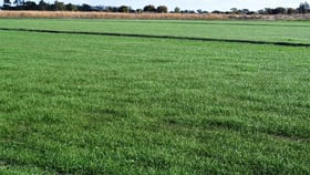 Rural / Farming commercial property for sale at 52 Little Murray Weir Road Castle Donnington VIC 3585