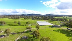 Rural / Farming commercial property for sale at 957 Mt Tully Road Stanthorpe QLD 4380