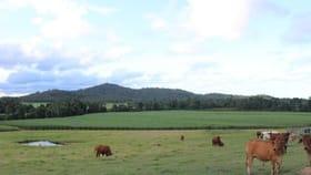 Rural / Farming commercial property for sale at 568 Granadilla Road El Arish QLD 4855