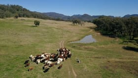 Rural / Farming commercial property for sale at ' Flaggy Valley', Timor Road Coonabarabran NSW 2357