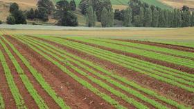 Rural / Farming commercial property for sale at 690 Kindred Road Kindred TAS 7310