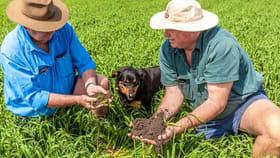Rural / Farming commercial property for sale at Jimbour Plain Farming Aggregation Jimbour East QLD 4406