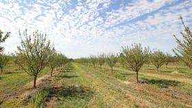 Rural / Farming commercial property for sale at Sec 542 Gordon Road Loxton SA 5333