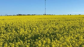 Rural / Farming commercial property for sale at 1394 Hiscox Rd Gabbin WA 6476