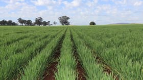 Rural / Farming commercial property for sale at 1 Gap Road Wirrinya NSW 2871