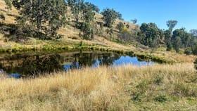 Rural / Farming commercial property for sale at 229 Bundarra Road Barraba NSW 2347