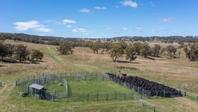 Rural / Farming commercial property for sale at 479 Whans Road Llangothlin NSW 2365