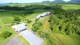 Rural / Farming commercial property for sale at East Palmerston QLD 4860