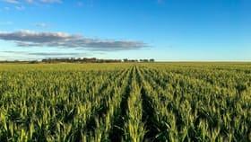 Rural / Farming commercial property for sale at Gurrady Farms Yuna WA 6532