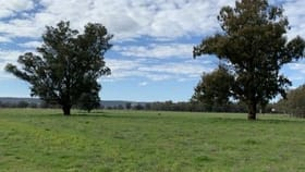 Rural / Farming commercial property for sale at Forbes NSW 2871