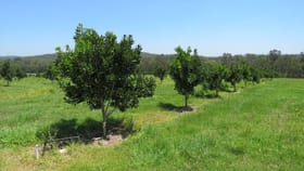 Rural / Farming commercial property for sale at 1408 Noosa Road Tandur QLD 4570
