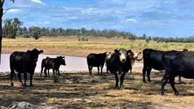 Rural / Farming commercial property for sale at 349 Boondandilla Road Millmerran QLD 4357