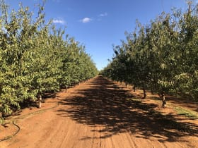 Rural / Farming commercial property for sale at Jakad Almond Orchard 222 Papershell Avenue Lindsay Point VIC 3496