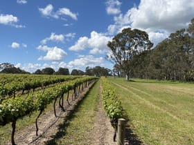 Rural / Farming commercial property for sale at Karingal Vineyard 67 East Settlement Road Wrattonbully SA 5271