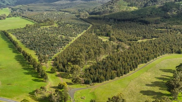 910 King Parrot Creek Road, Strath Creek VIC