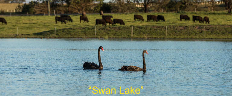 "Rural / Farming commercial property for sale at 1301 Highland Way - ""Swan Lake"" Wingello NSW 2579"