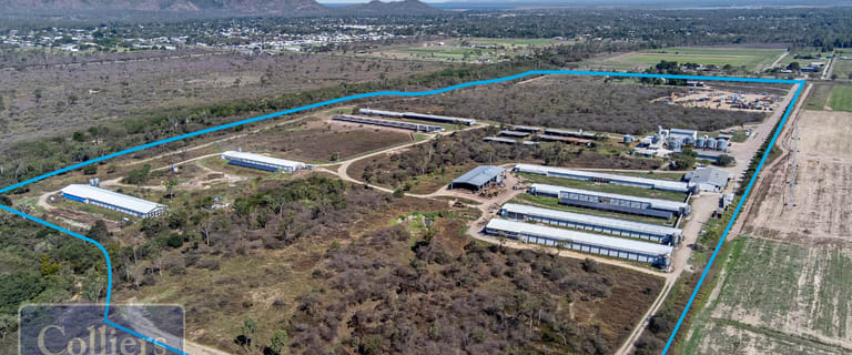Rural / Farming commercial property for sale at 300 & 360 Allambie Lane Gumlow QLD 4815