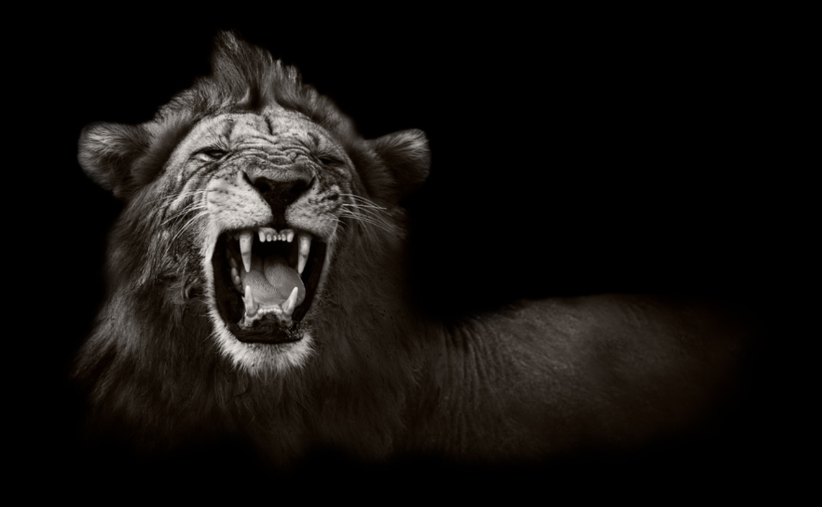 Lion_bw_g4kymt