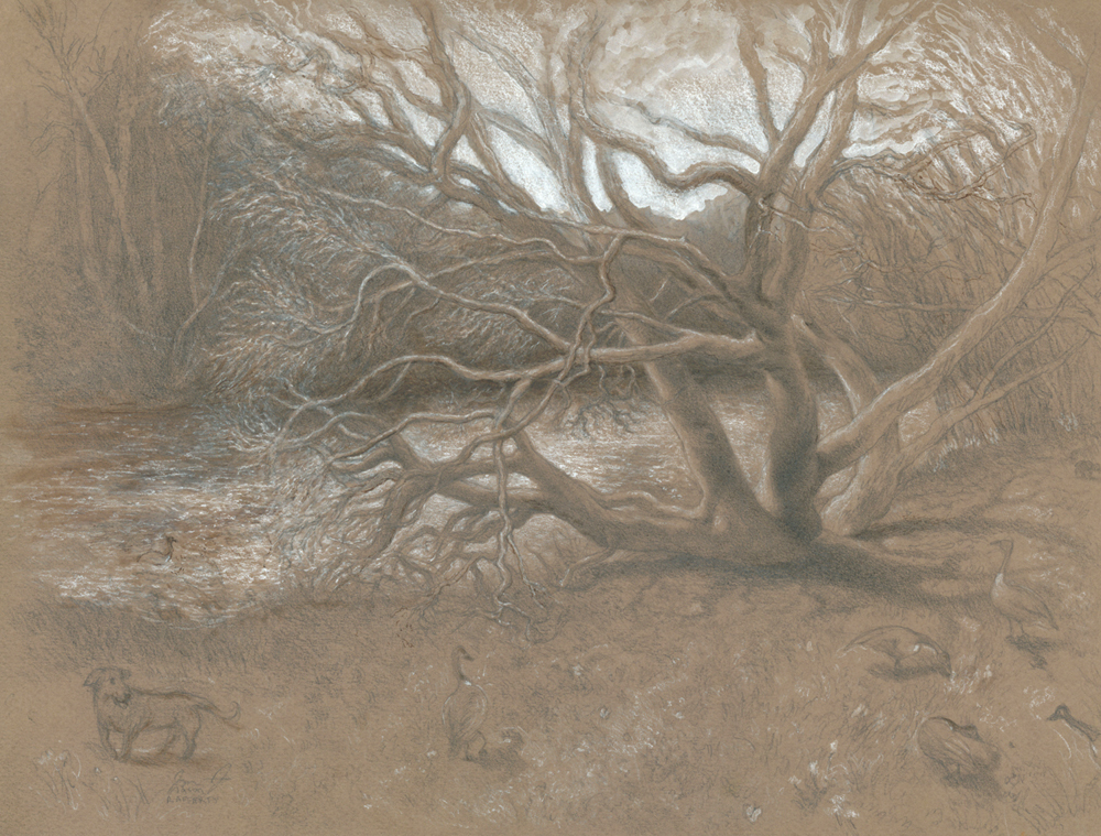 Catawba_tree_french_broad2_s_-_rafferty_-_drawing_gmskbb