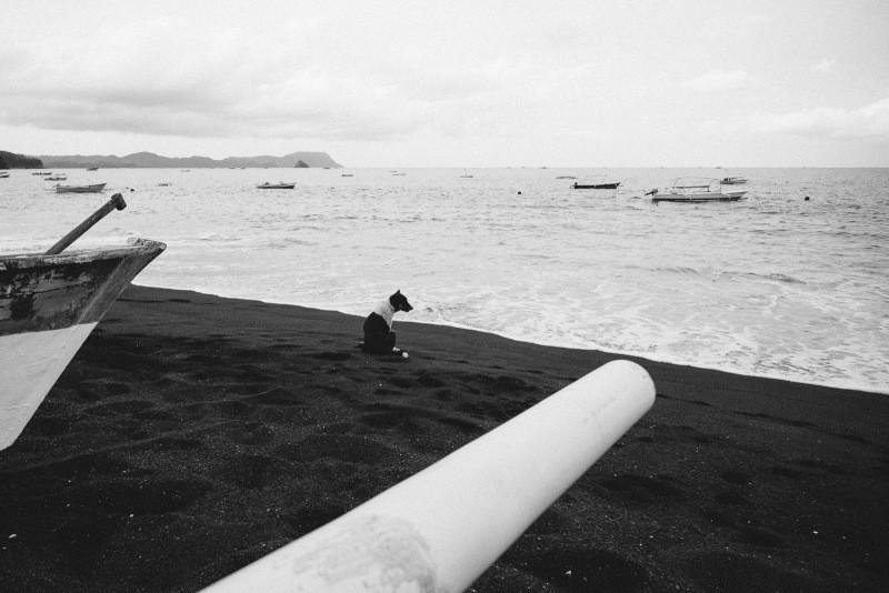 Image for 'Tangkoko beach vibes'