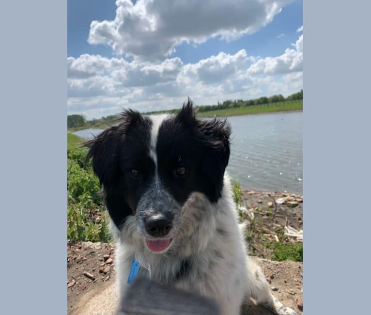 Photo of Diesel, an Eastern European Village Dog  in Roemenië