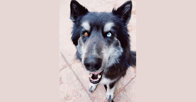 Photo of Dexter, a