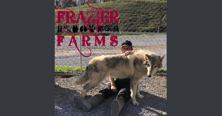 Photo of Frazier's Gray Beast, a