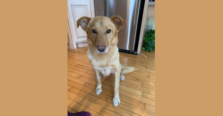 Photo of Ellie, an Alaskan-type Husky, Siberian Husky, Saint Bernard, German Shepherd Dog, and Mixed mix in Manitoba, Canada