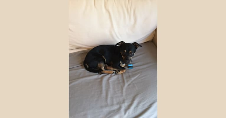 Photo of Dan, a Chihuahua (12.9% unresolved) in Athens, Georgia, USA