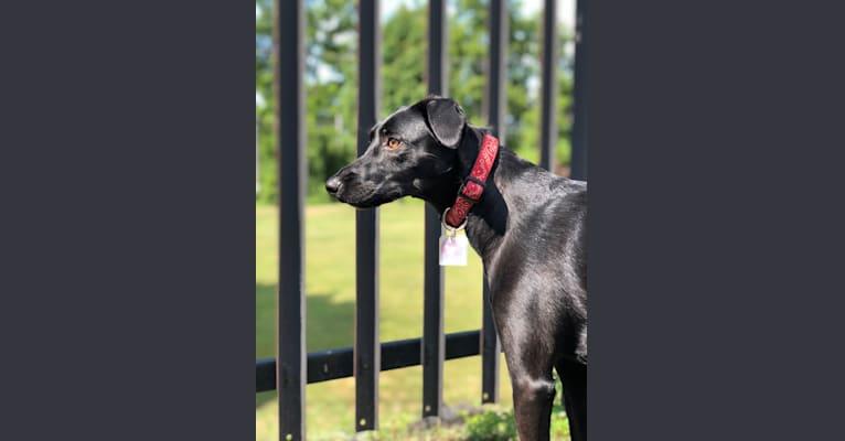 Photo of Pepper, an European Village Dog and Dalmatian mix