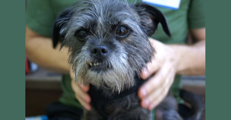 Photo of Chewbacca, a Chihuahua, Poodle (Small), Rat Terrier, and Maltese mix