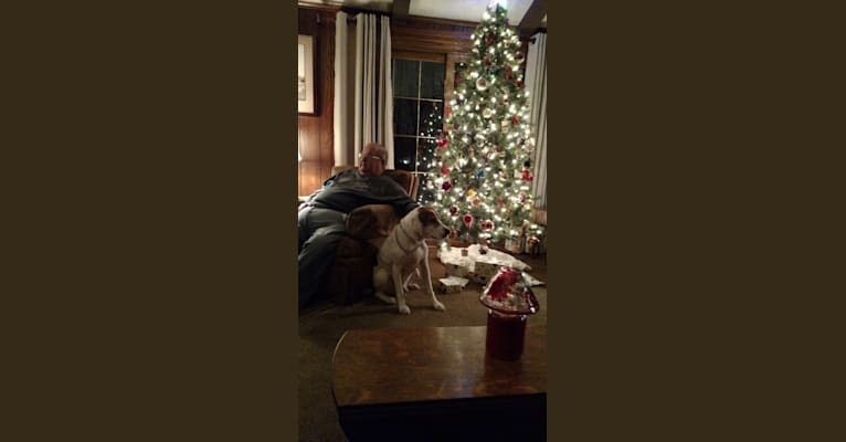 """Photo of Little Joe, aka """"Scar Face,""""  Our #1 Hound Dog, a Treeing Walker Coonhound  in West Virginia, USA"""