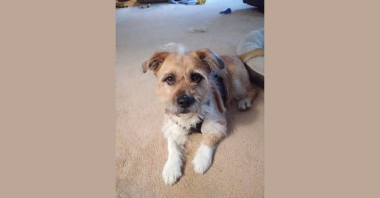 Photo of Benny, a Shih Tzu and Mixed mix in Middletown, New York, USA