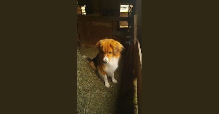 Photo of Buddy, a German Shepherd Dog mix in Kitchener, Ontario, Canada