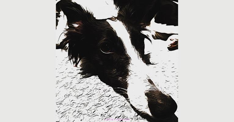 Photo of Windspirit Godiva (aka CRICKET ... Needs A Bath), a Silken Windhound  in New Jersey, USA