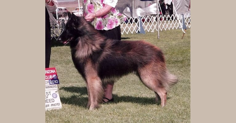 Photo of Sage, a Belgian Shepherd  in Scottsdale, Arizona, USA