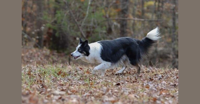 Photo of Leesi, a Border Collie