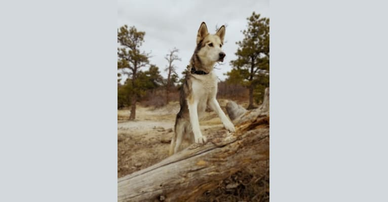 Photo of Tonka, a   in California, USA