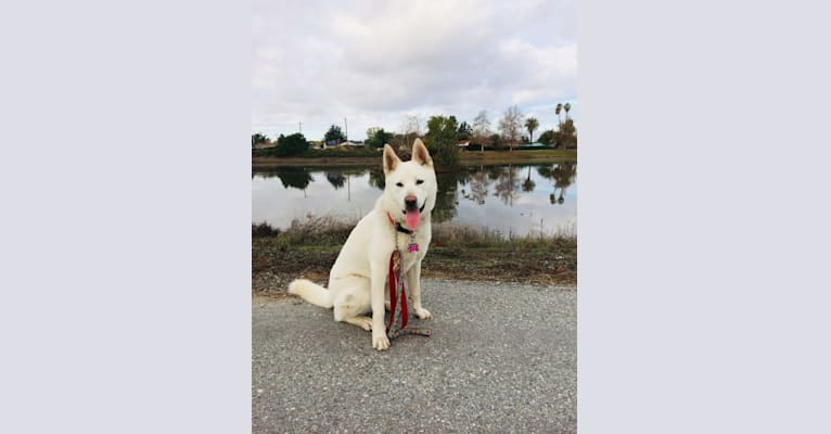 Photo of Pearl, a Pungsan  in Los Angeles, California, USA