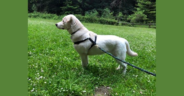 Photo of Ludo, a German Shepherd Dog, Border Collie, Siberian Husky, and Mixed mix in Santa Rosa, CA, USA